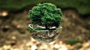 Роль мониторинга окружающей среды