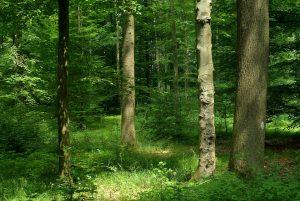 Мониторинг лесных систем