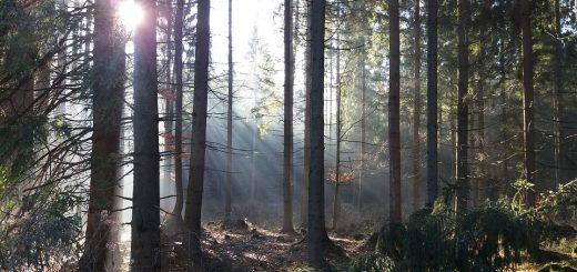 Мониторинг лесных ресурсов