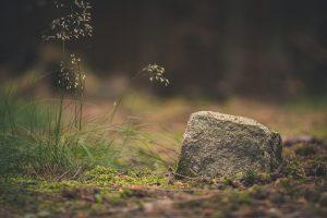 Мониторинг земель лесного фонда