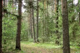 Экологический мониторинг леса