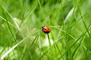 Мероприятия по мониторингу качества природной среды