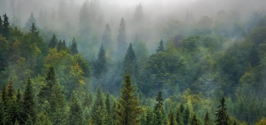 Лесной мониторинг