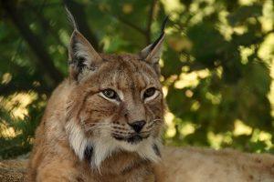 Мониторинг диких животных