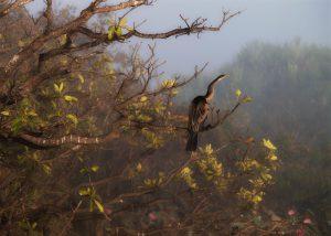 Виды особо охраняемых природных территорий
