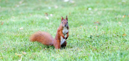Мониторинг растительного и животного мира