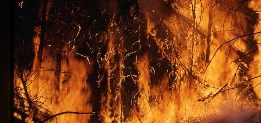 Мониторинг лесных пожаров России