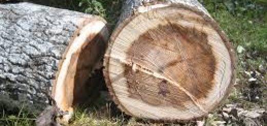 Эксперты оценили ущерб от вырубки