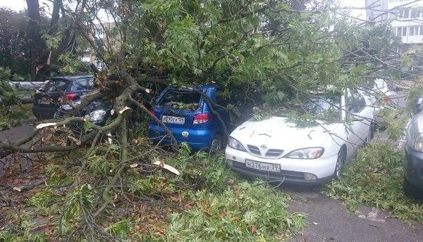 Упавшее дерево повредило три автомобиля