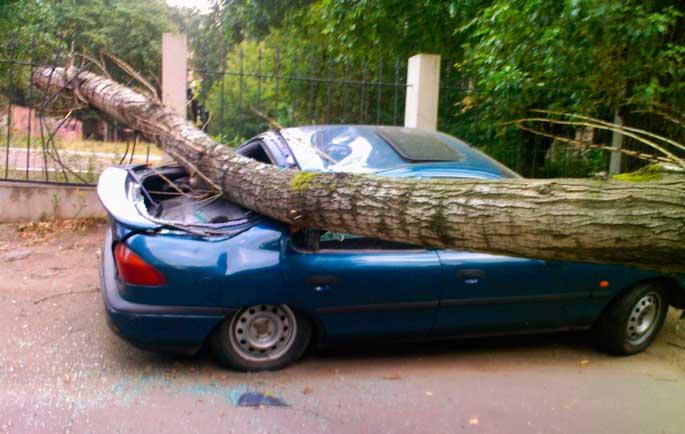 Упало дерево на машину, как доказать вину его владельца?
