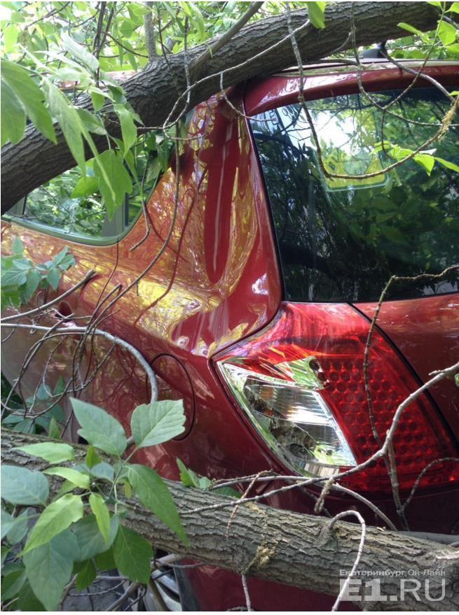 Куда обращаться, если на машину упало дерево и повредило ее?