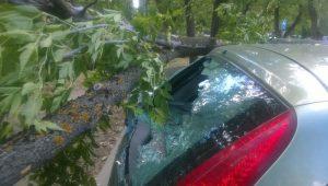 Если на машину упало дерево, что делать?
