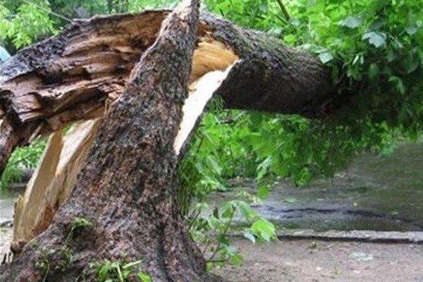 Дерево упало на человека, что делать — последовательность