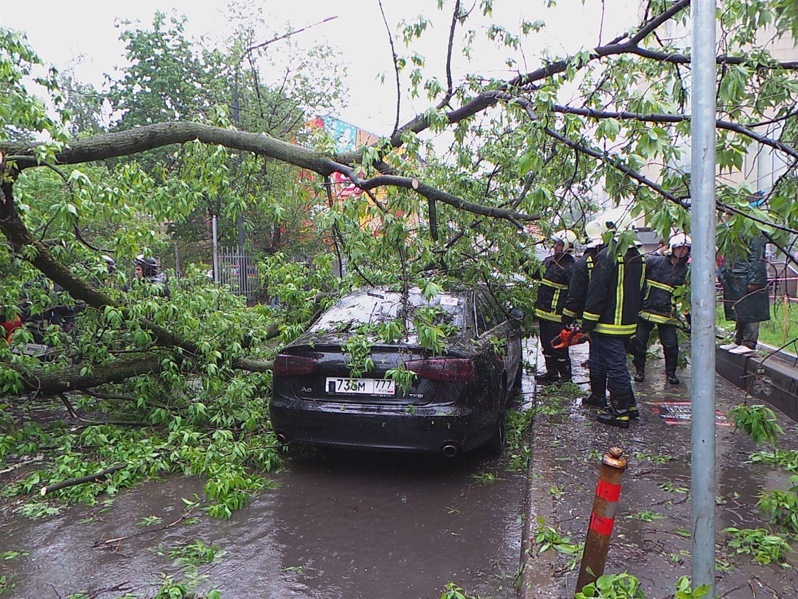 Падение дерева на автомобиль