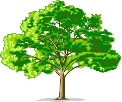 Дендрологическая экспертиза дерева
