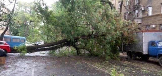 Упало дерево куда звонить?