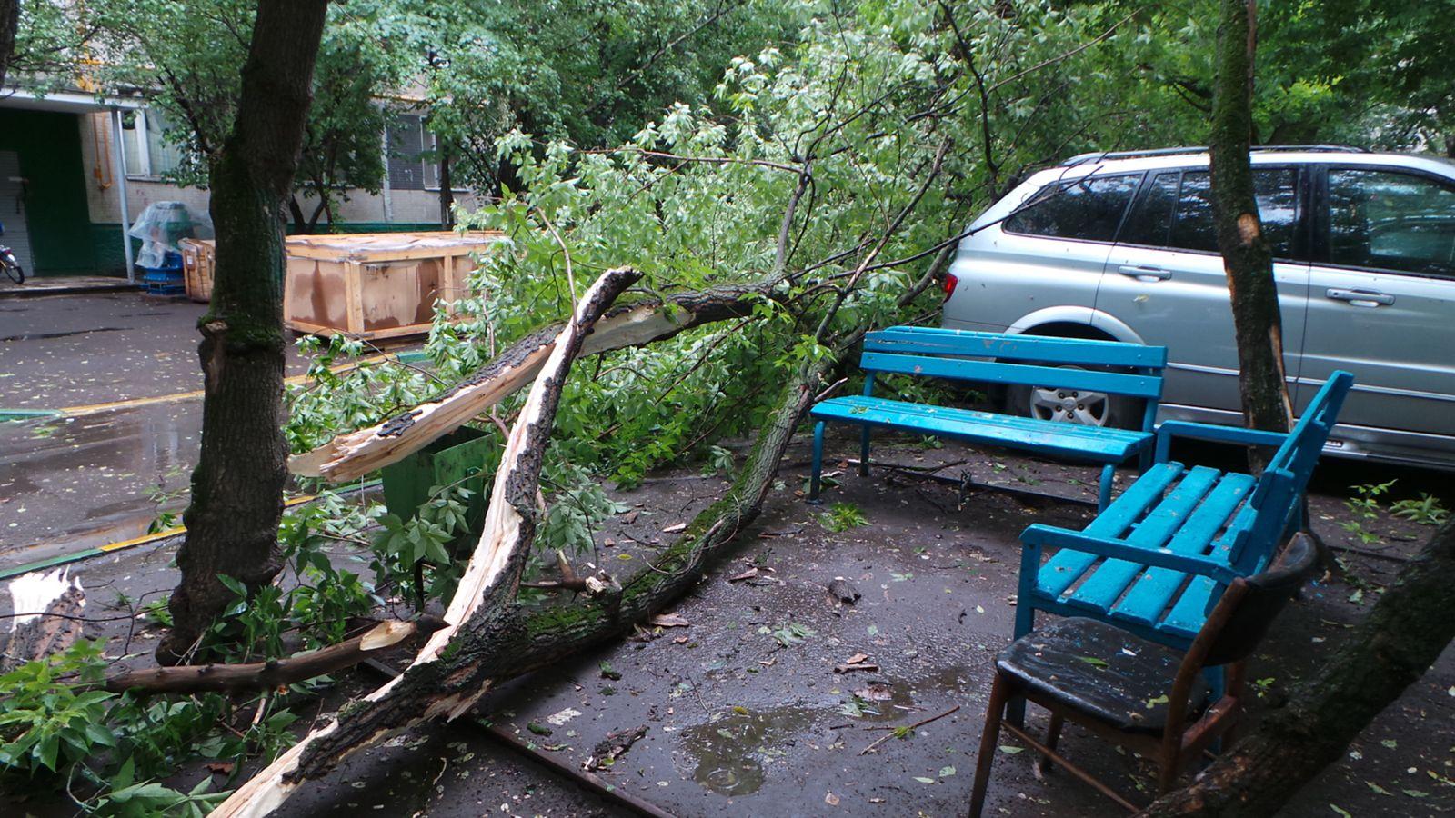 Дерево упало на машину, кто виноват?