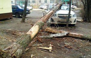 На машину упало дерево — что делать точно?