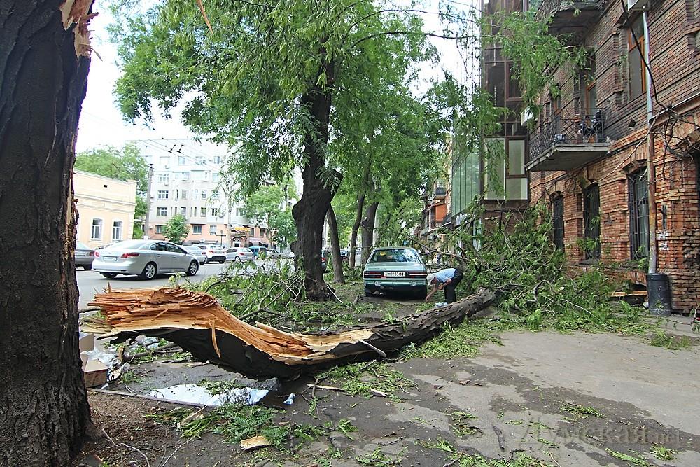 Упало дерево. Что делать?