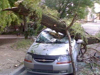 Упавшее дерево повредило машину