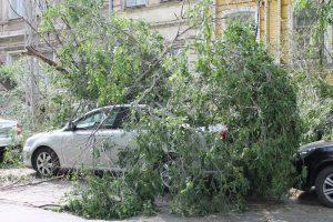 Если на машину упало дерево что делать?