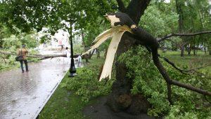 Не приснилось падение с дерева ветки.