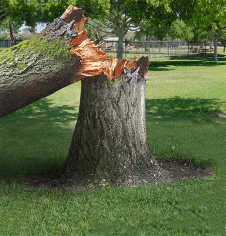 Факторы, влияющие на падение дерева