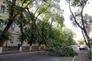 Если упало дерево,куда звонить?