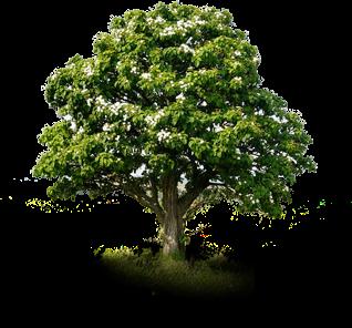 Дендрологическая экспертиза дерева цена