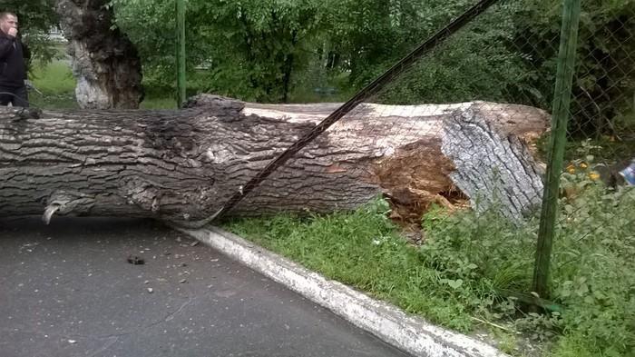 Упало дерево в Москве