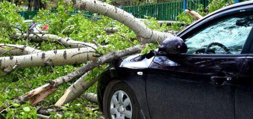 На машину упало дерево, куда обращаться надлежит?