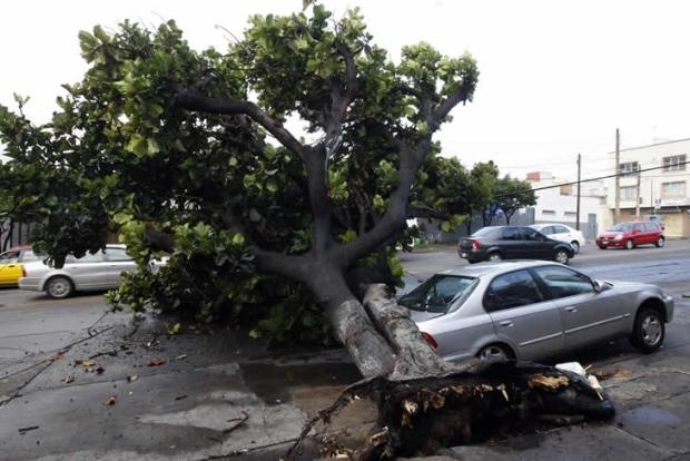 Падение дерева на автомобиль ― страховой случай