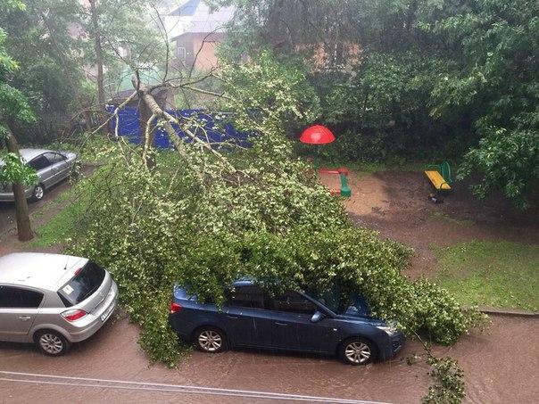 На авто упало дерево
