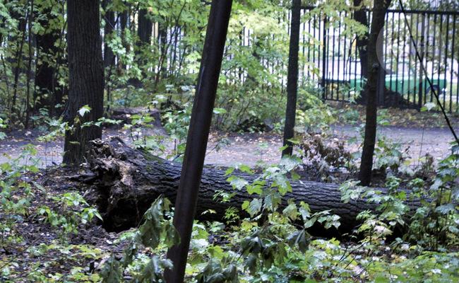 Падение дерева: цена экспертизы
