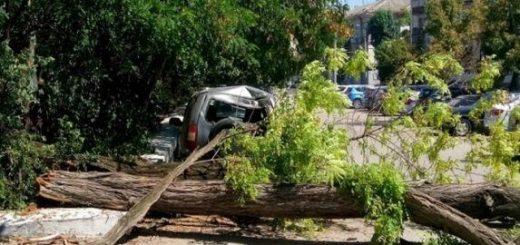 Дерево упало на машину, что делать?