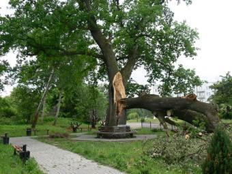 Падают деревья в Московской области
