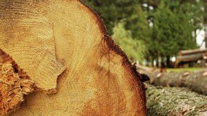 Что делать, если упало дерево на машину?