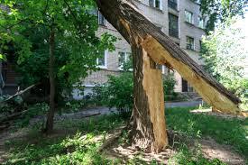 Отчего падают деревья