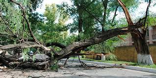 Если дерево упадет