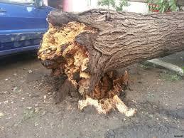Куда обращаться, если упало дерево?