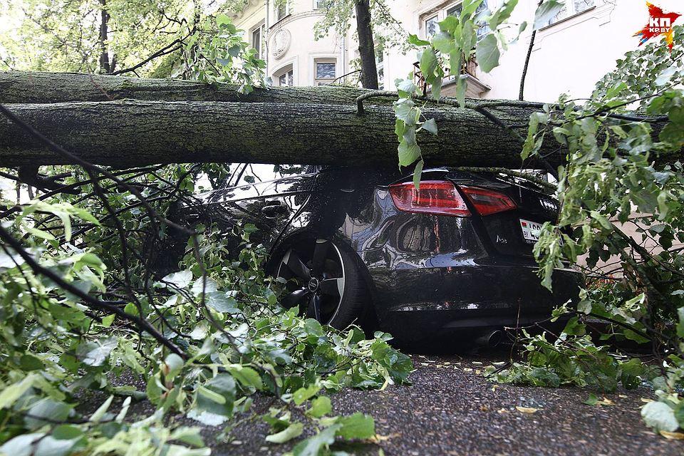 Упало дерево, что делать автовладельцу?