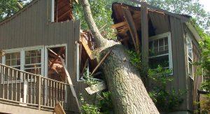 Падение деревьев на дома