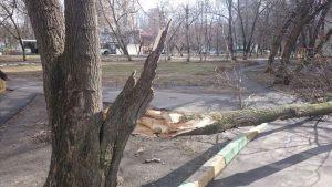 На машину упало дерево что делать?