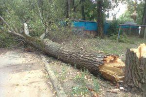 Падение деревьев в Подмосковье: действия