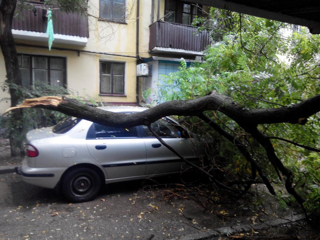 Дерево упало на машину, куда звонить в Москве?