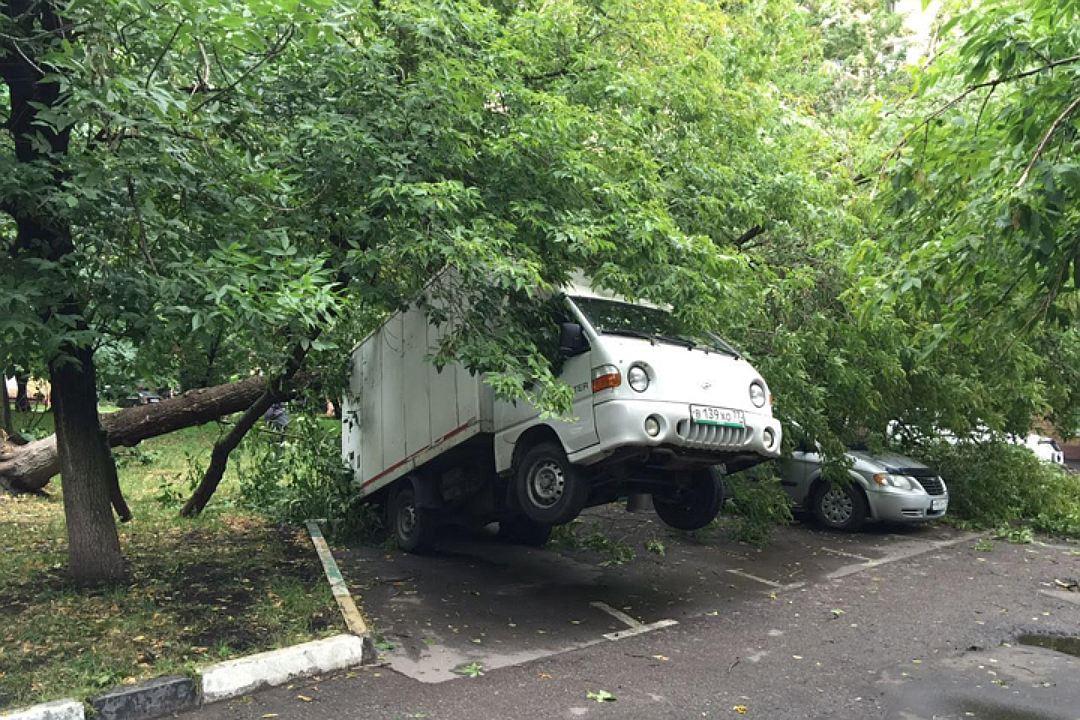 Падение дерева на авто