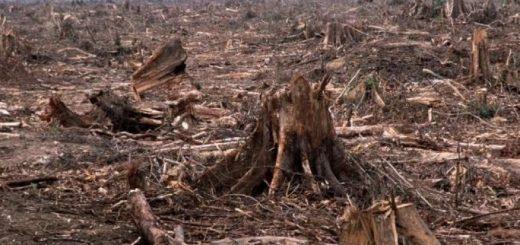 Экономический ущерб от загрязнения окружающей среды: главное