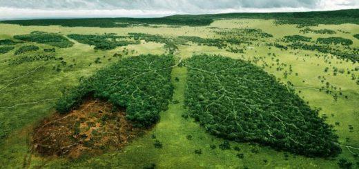 Оценка вреда окружающей среде: принципы