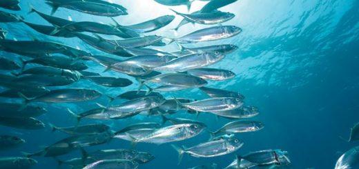 Расчет вреда водным биоресурсам