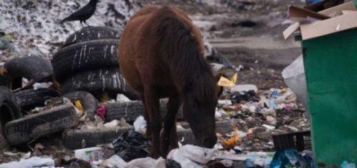 Расчет: экологический вред от